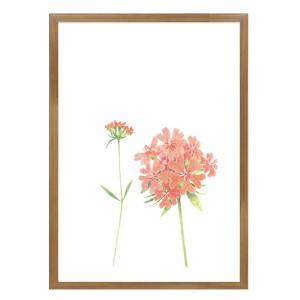 털동자꽃 - 정은주 작가