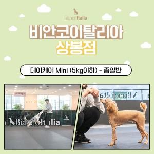 [비안코이탈리아상봉점]강아지 데이케어 Mini_5kg이하 종일반