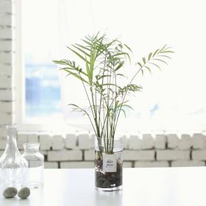 테이블야자 원통 수경재배 화분