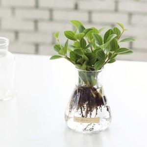 아몬드페페 수경재배 화분