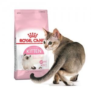 로얄캐닌 키튼 10kg 면역력강화 어린고양이사료