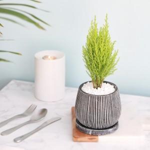 율마 엔틱 화분 공기정화식물